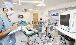 Veterinary Surgery & Operations