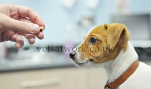 Pet Health Counsellor & Nurse Consults